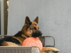 Ramaraman Dog